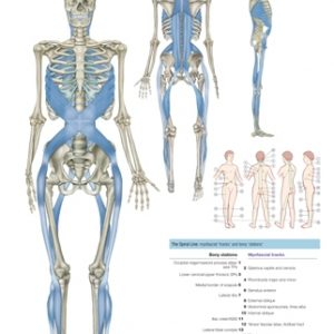 Anatomy Trains Third Edition Posters