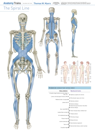 Anatomy Trains Third Edition Posters Products Directory Massage