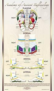 Reflexology foot poster