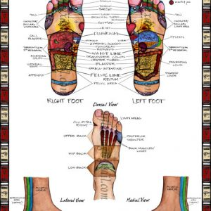 The New Reflexology Diagram