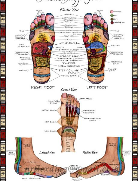 The New Reflexology Diagram Products Directory Massage Magazine