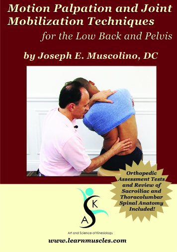 Motion Palpation And Joint Mobilization Techniques