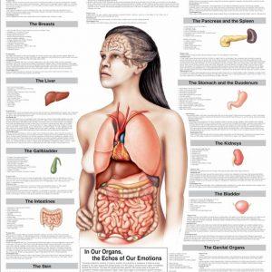 Understanding Your Organs Chart
