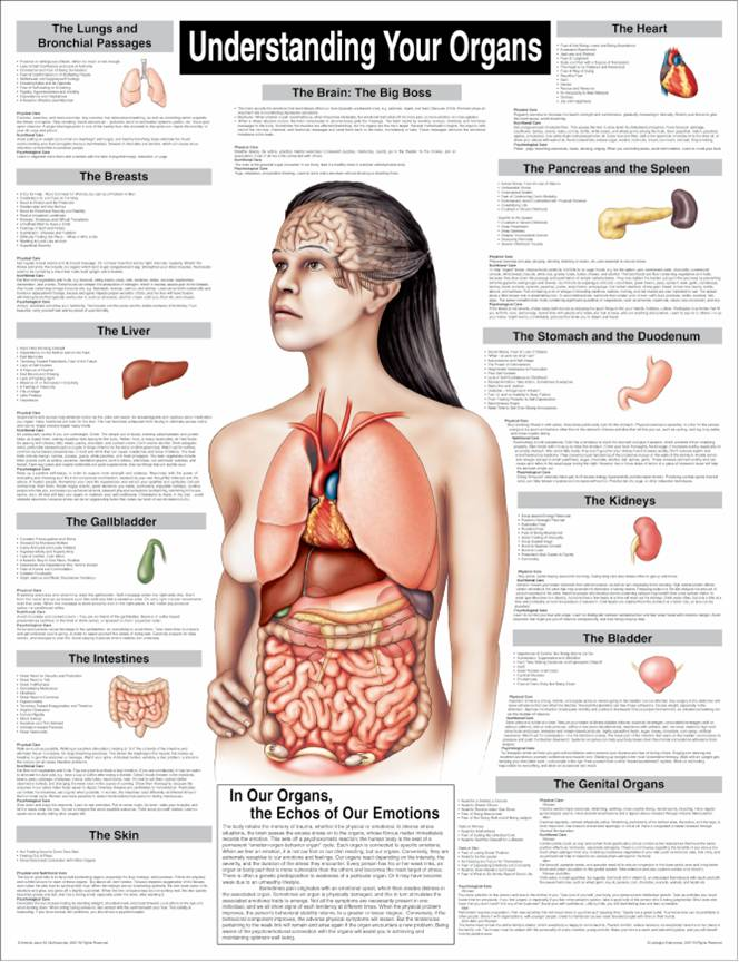 Understanding Your Organs Chart Products Directory Massage Magazine