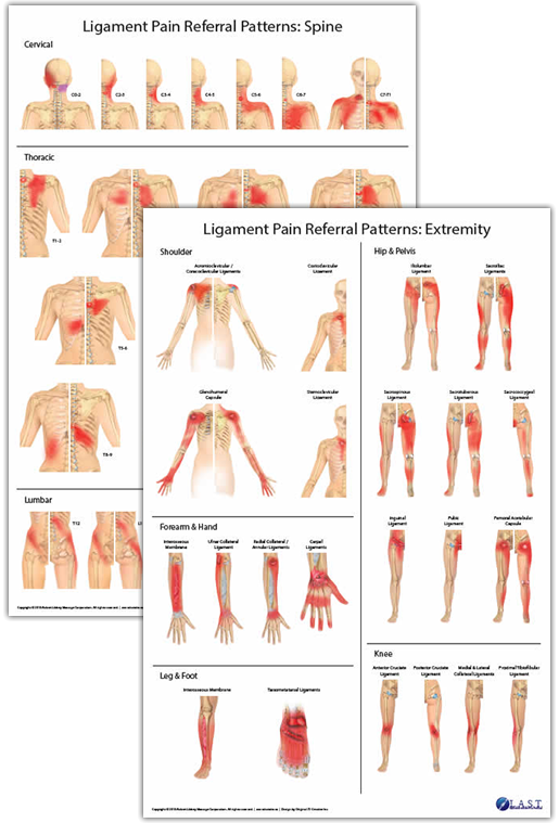 Ligament Pain Referral Pattern Posters Products Directory Adorable Pain Referral Patterns