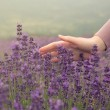 Combining and Using Your Own Lavender Massage Cream
